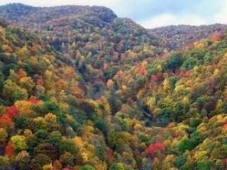 Fall color in our Smoky Mountains