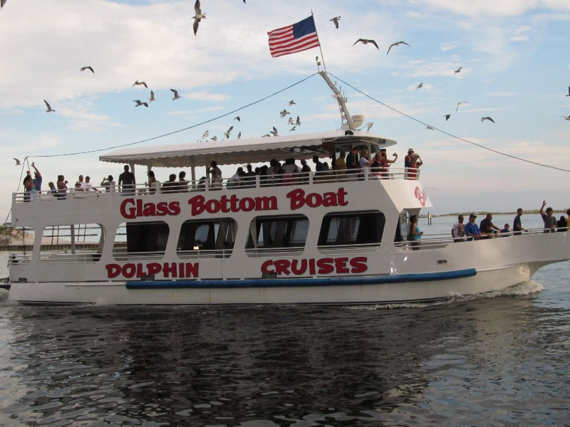 Kids/Adults love the dolphin cruise